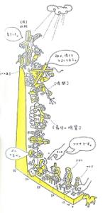 講述耶穌一生的畫稿 | from drezier's blog [日本生死書] dated 2006/11/26